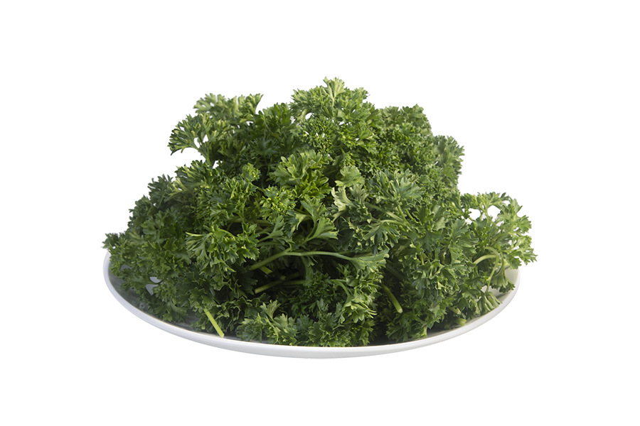 Curly Parsley plate